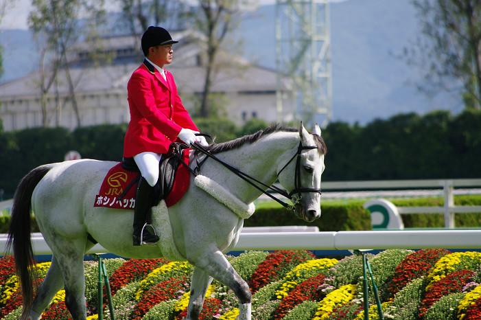 京都競馬場..._f0152550_18383475.jpg