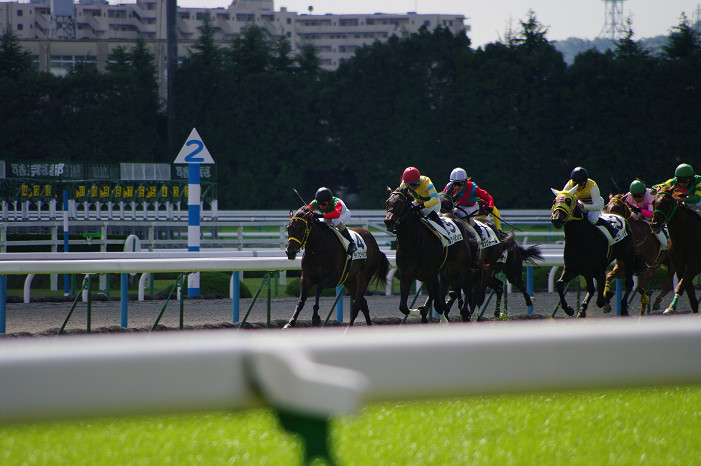 京都競馬場..._f0152550_18385336.jpg