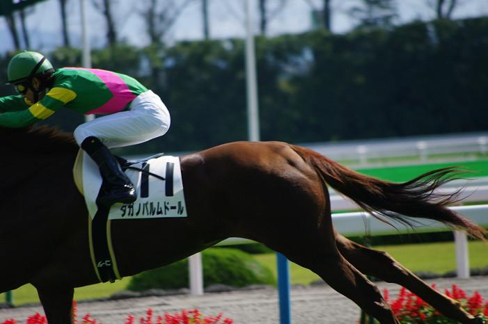 京都競馬場..._f0152550_18392376.jpg