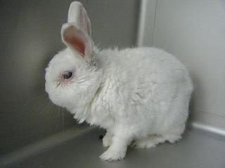 長生きウサギさんの手術_b0059154_10133637.jpg