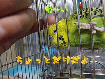 f0196665_0225223.jpg