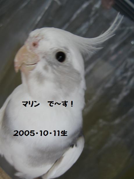 e0027078_1752087.jpg