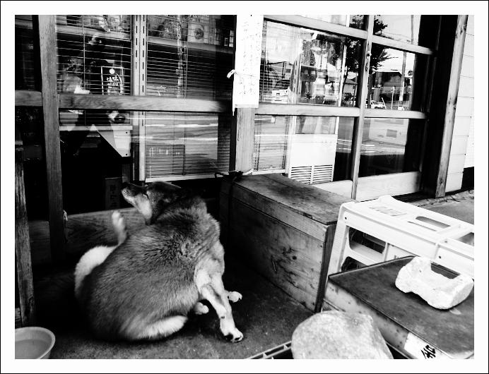 番犬業_c0170584_845914.jpg
