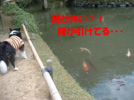 c0120585_22463970.jpg