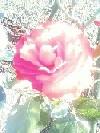 c0213288_131851100.jpg