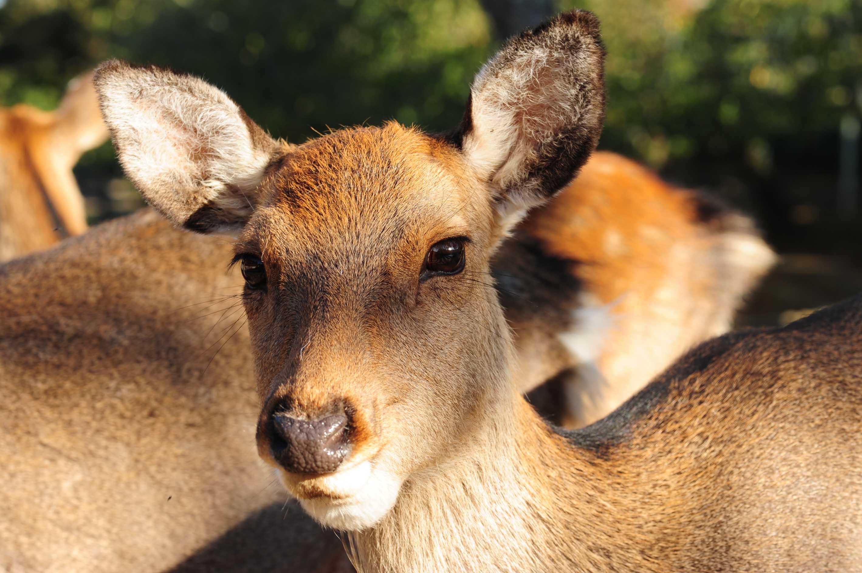 鹿さんの視線_e0157647_22223871.jpg