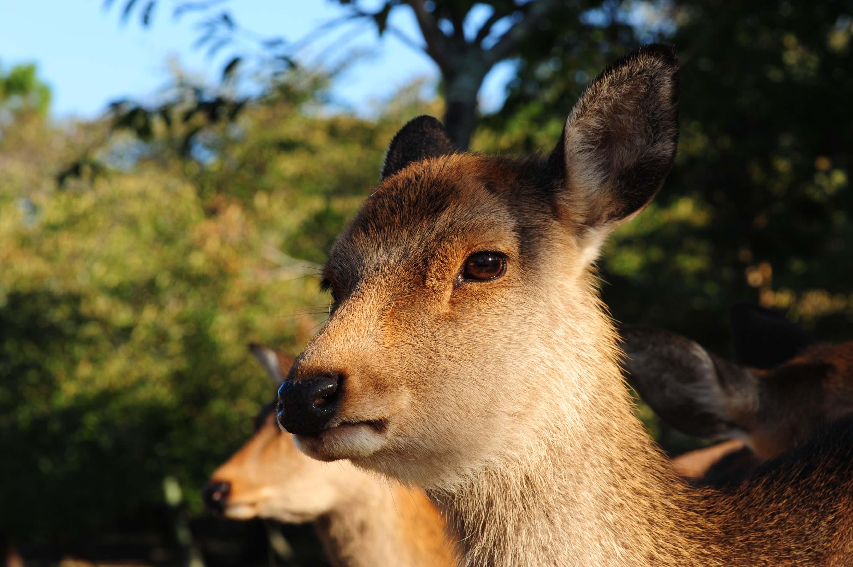 鹿さんの視線_e0157647_22225783.jpg