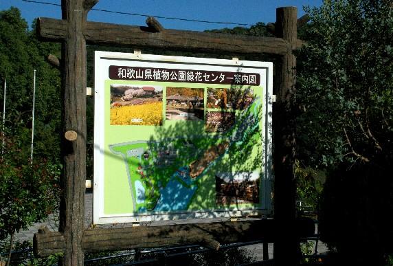 和歌山県植物公園緑花センター _b0093754_23523172.jpg