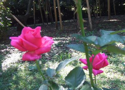 10月月例会/花前の施肥、虫除け/秋の花は、もうすぐです_a0094959_1002049.jpg
