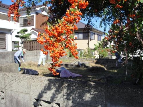 みさき公園団地の草刈り&草片付け_c0108460_18491911.jpg