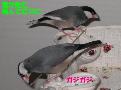 b0158061_2295383.jpg