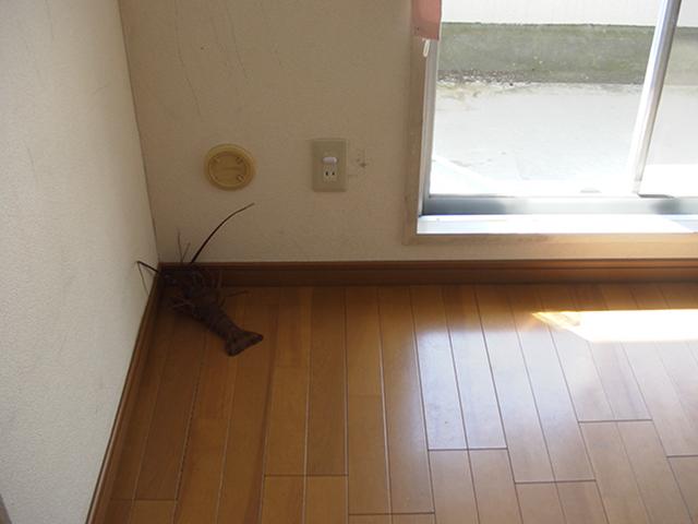キッチンにリビングに、タフスプリング。_c0004568_1151327.jpg