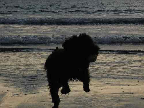 クンクロ海へ行く。_b0182969_195465.jpg