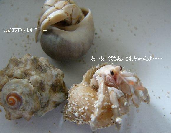 節約丼 ☆ 茄子とピーマンの味噌炒め丼 ♪_c0139375_11551481.jpg