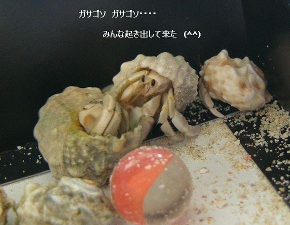 節約丼 ☆ 茄子とピーマンの味噌炒め丼 ♪_c0139375_11552860.jpg