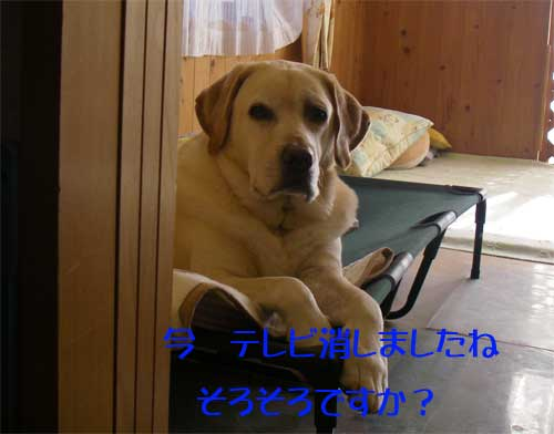 b0145486_1524823.jpg