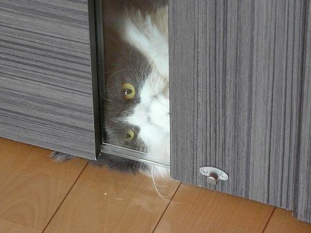 抵抗する猫_e0160595_14212133.jpg