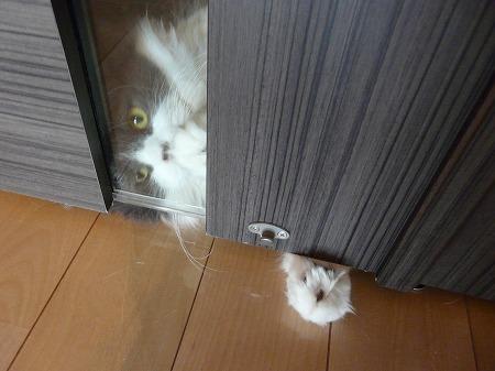抵抗する猫_e0160595_14212581.jpg