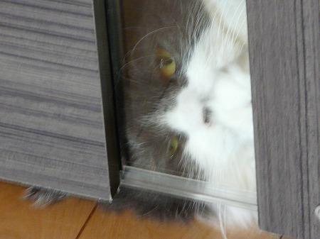 抵抗する猫_e0160595_1421296.jpg