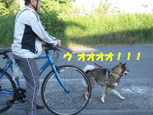 f0143123_20452016.jpg