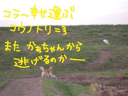 f0176830_21441917.jpg