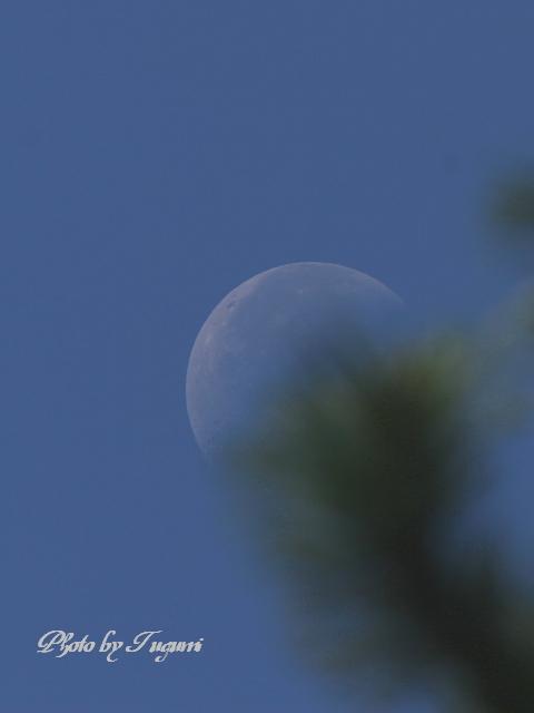下弦の月_f0037633_16344962.jpg