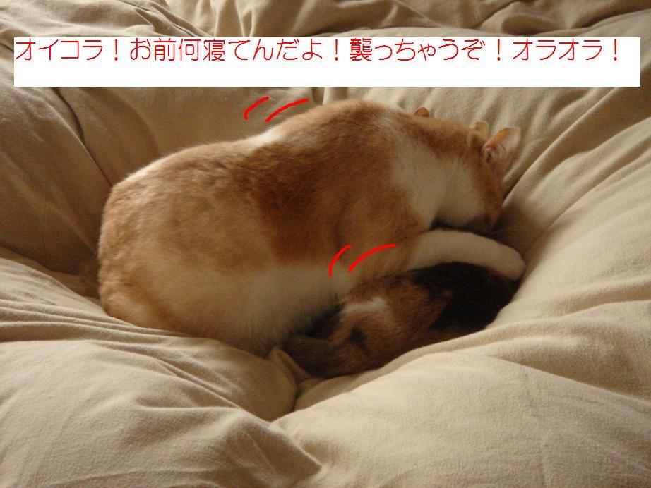 f0131535_11591022.jpg