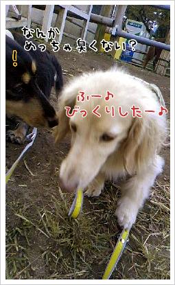 b0014949_18591138.jpg