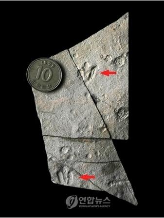 世界最小、赤ちゃん恐竜の足跡の化石発見_b0052564_14305725.jpg