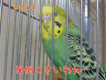 f0196665_01378.jpg