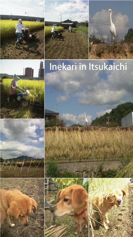 稲刈り_e0158970_11235056.jpg
