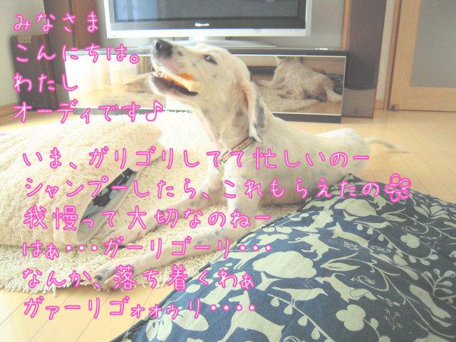 c0215871_1392044.jpg