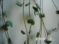 d0098182_2041957.jpg