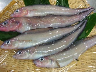 幻の魚☆_d0135908_11463537.jpg