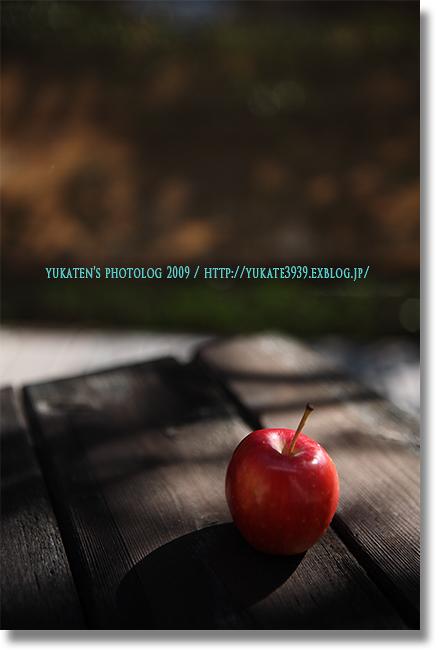 ヒメリンゴ_c0136524_19175622.jpg
