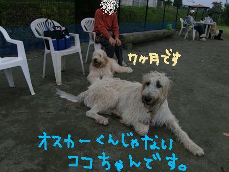 f0176830_1781182.jpg