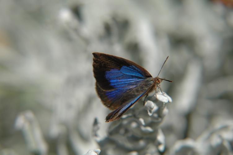 阪南市の蝶2009年8月より_e0194952_21381229.jpg