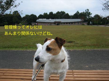 c0179472_1053271.jpg