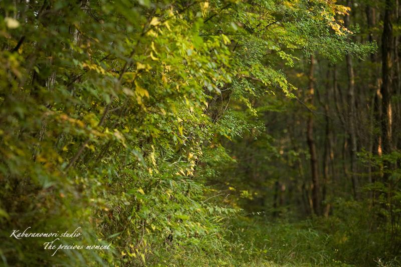 09/10/14     森の散歩 with EF135 F2 _c0137403_1647144.jpg