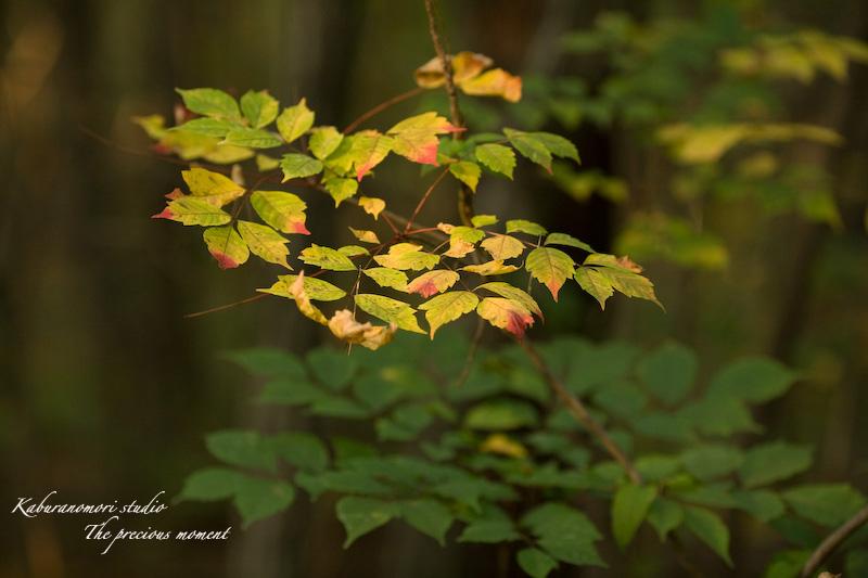 09/10/14     森の散歩 with EF135 F2 _c0137403_16474337.jpg