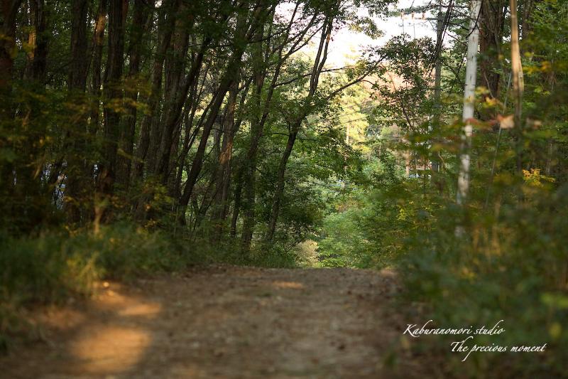 09/10/14     森の散歩 with EF135 F2 _c0137403_164986.jpg