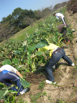 増田農園研修 _c0130206_1251670.jpg