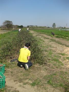 増田農園研修 _c0130206_128454.jpg