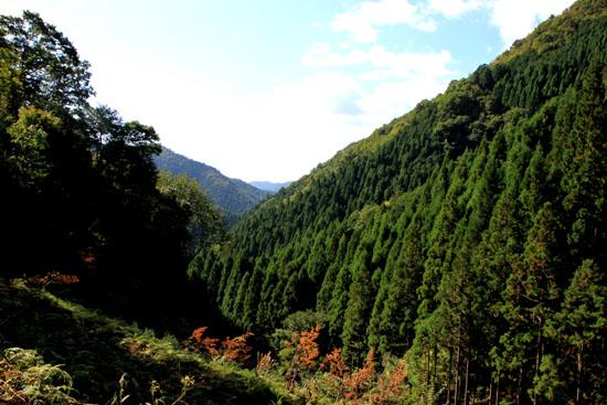 雲が畑 魚谷峠_e0048413_212346.jpg