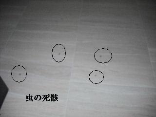 f0031037_19573492.jpg