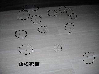 f0031037_19574373.jpg