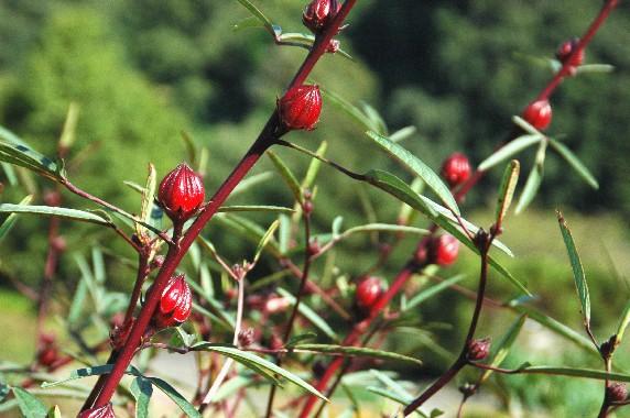和歌山県植物公園緑花センター _b0093754_002970.jpg