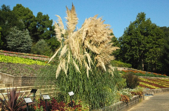 和歌山県植物公園緑花センター _b0093754_23562239.jpg