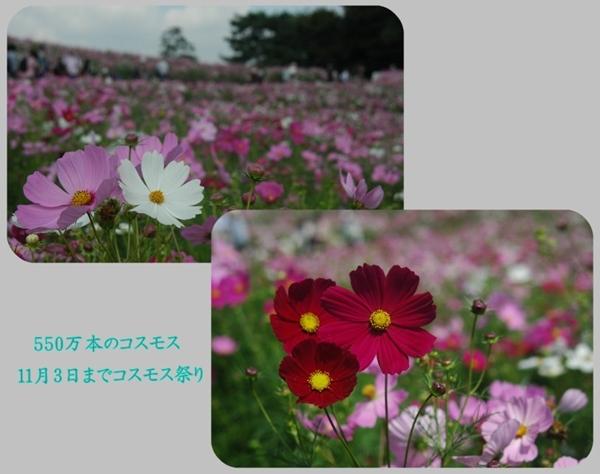 e0020957_1014775.jpg