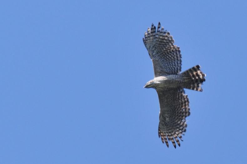 クマタカと他の鳥たち_f0053272_103274.jpg